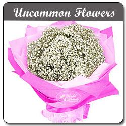 Uncommon Flowers