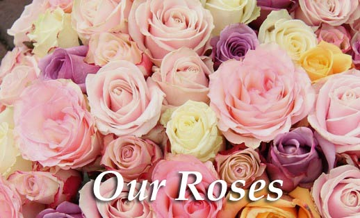 Japan Flower Delivery   Send Flowers and Gifts Online