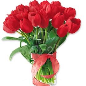 Vivacious Tulips