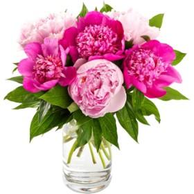 Fluffy Peonies Vase