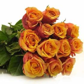 Milva Rose