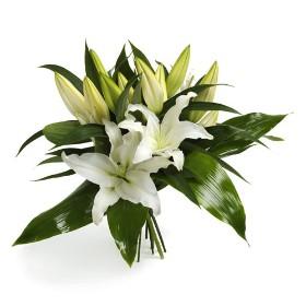 Wonderfully Lilies