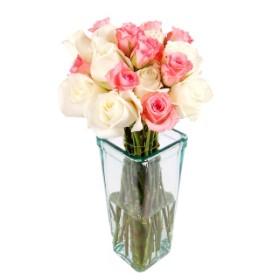 Dozen Pink & White Roses