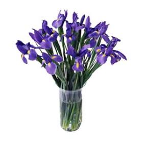 Purple Everlasting
